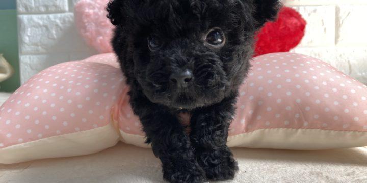 山口市の原田さんの犬ミントちゃんです。
